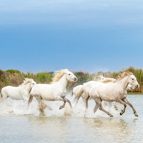 Family stay in Camargue